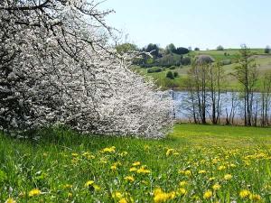 primavera---