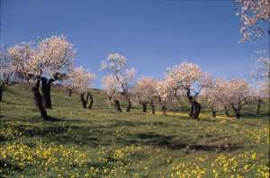 primavera atmetllers