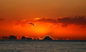 posta de sol amb gavina