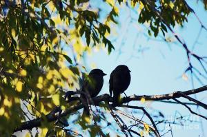two-love-birds-on-a-tree-branch-trude-janssen