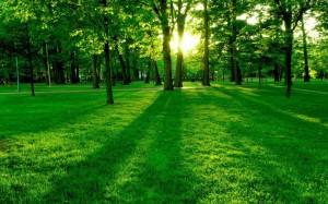 Spring-Landscape-HD-Wallpaper-1024x640