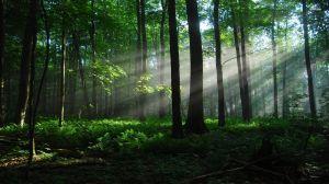 quiet-forest-298406