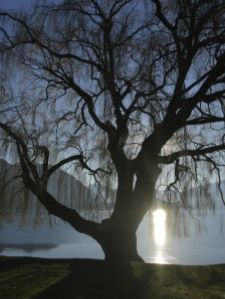 willow-tree-lake-wanaka-wanaka-south-island