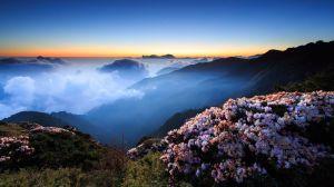 sky-night-flowers-wallpaper