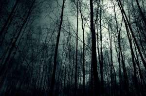 Dark-Night-Forest-Wallpaper