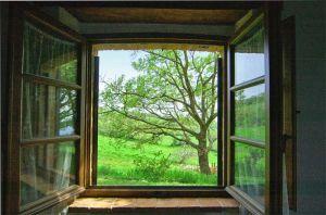 finestra_i arbre