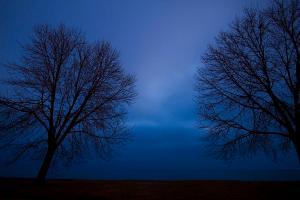 blue-hour-trees-silhouette-sven-brogren