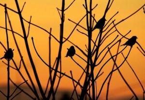 dawn with birds