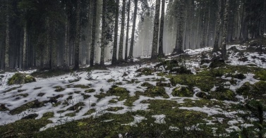 snow-thawing-nature-forest-landscape