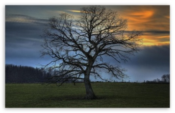 leafless_tree_hdr-t2