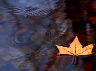 floating-leaf-cherie-duran