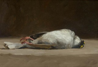 dead-bird5