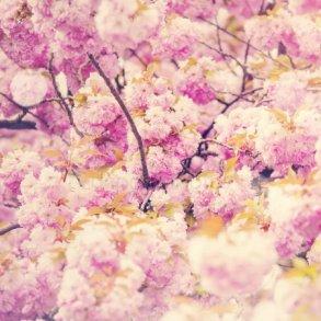 somni de primavera